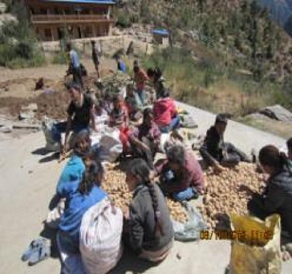 Barnen sorterar potatis 600x653