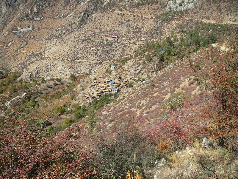 56 Skövlad skog vid byn Yangar 800x600