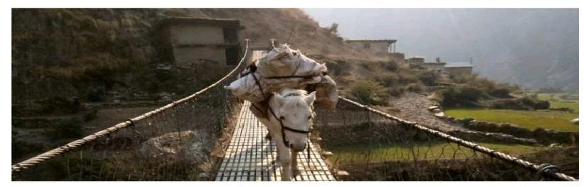 15 Hästtransport